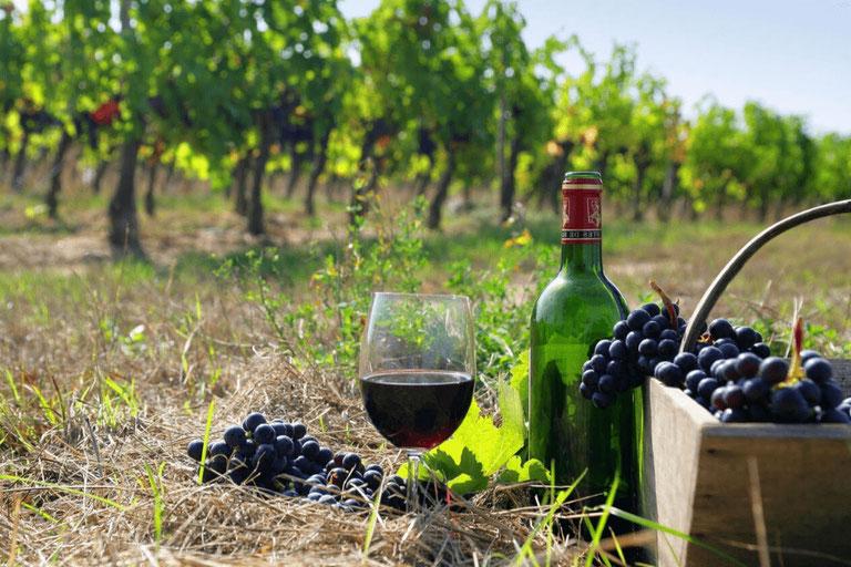 Вино – национальная гордость Грузии. — Экспертные советы и обзоры недвижимости на GEOLN.COM. Фото 6